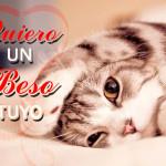 Imágenes de gatitos y perritos con frases lindas