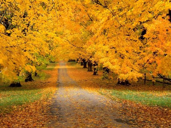 otoñoamarillento11