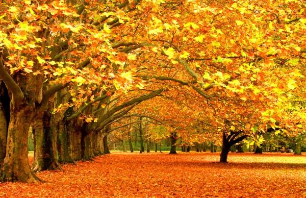 otoñoamarillento7