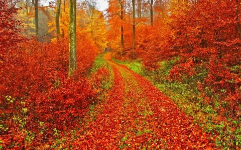 otoñorojizo4