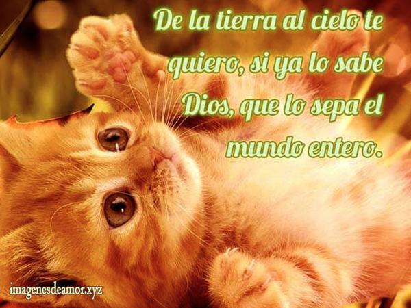 DecirTeQuiero15