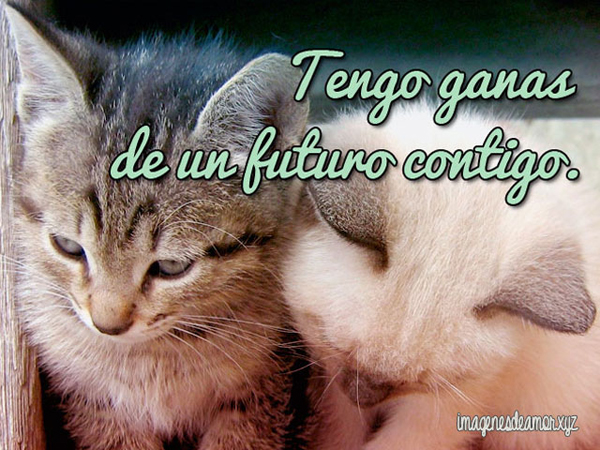 DecirTeQuiero27