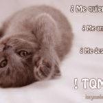 Imágenes de gatos con bonitos mensajes para decir te quiero y te amo