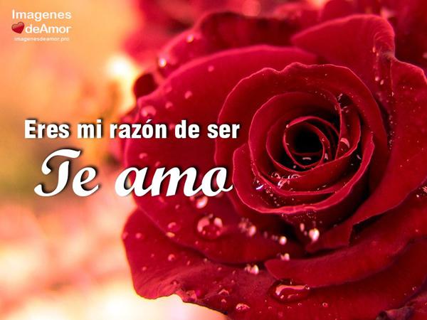 RosasParaDecirTeAmo