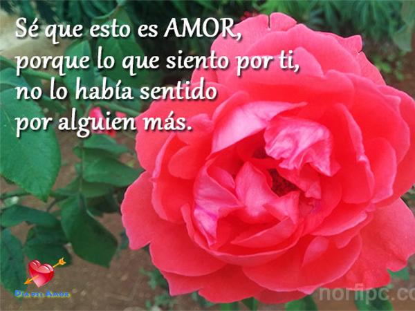 RosasParaDecirTeAmo11