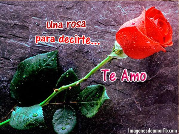 RosasParaDecirTeAmo14