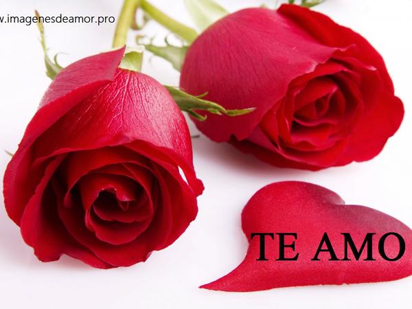 RosasParaDecirTeAmo17