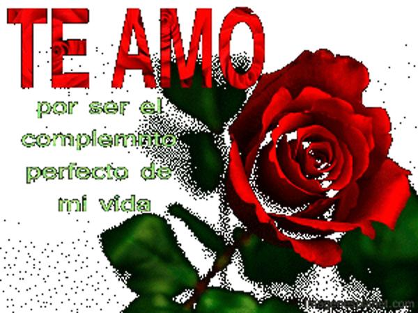 RosasParaDecirTeAmo19