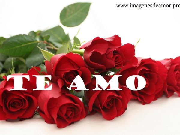 RosasParaDecirTeAmo2