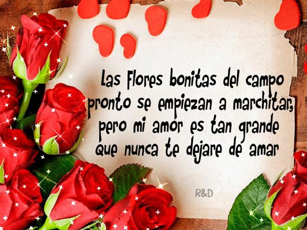 RosasParaDecirTeAmo20