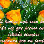 Imágenes de rosas con frases para decir te amo