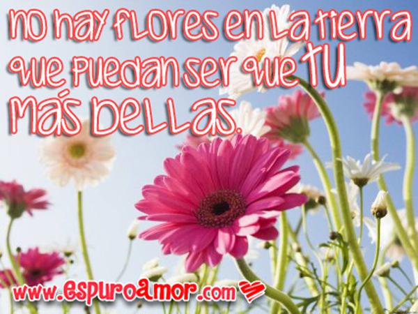 FloresyFrasesDeAmor12