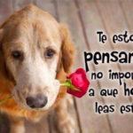 Imágenes bonitas de perros con hermosas frases para decir te extraño