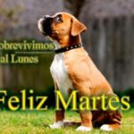 Imágenes con frases motivadoras para desear Felíz Martes