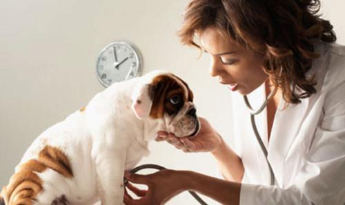 veterinario.jpg3