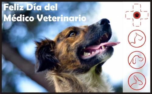 veterinariofeliz.jpg7