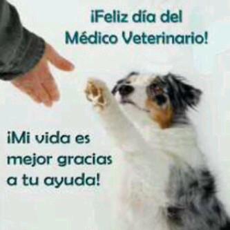 veterinariofelizfrase.jpg2