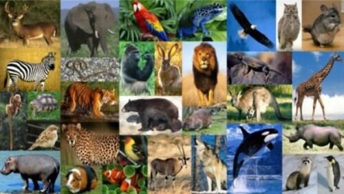 animalesmundial-jpg21