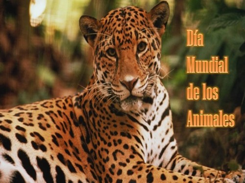 animalesmundial-jpg39