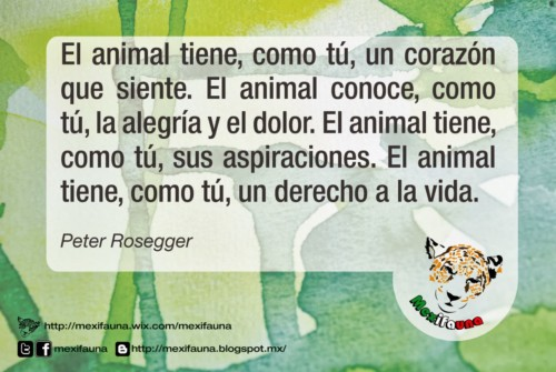 animalesmundialfrase-jpg17