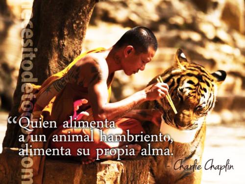 animalesmundialfrase-jpg18