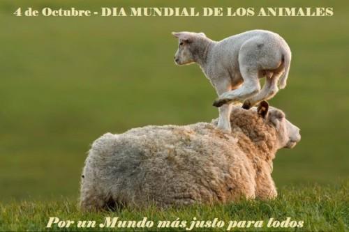 animalesmundialfrase-jpg19