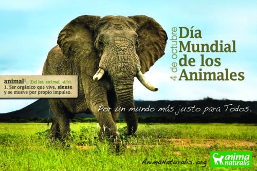 animalesmundialfrase-jpg1