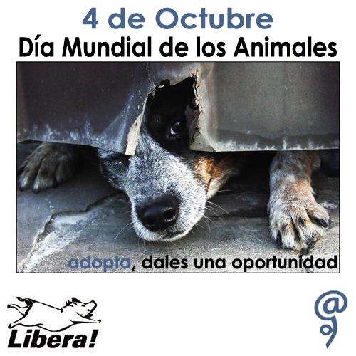 animalesmundialfrase-jpg6