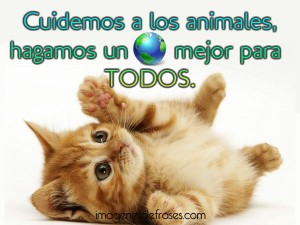 animalesmundialfrase-jpg7