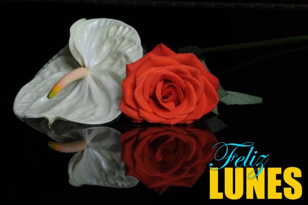 lunesflor3
