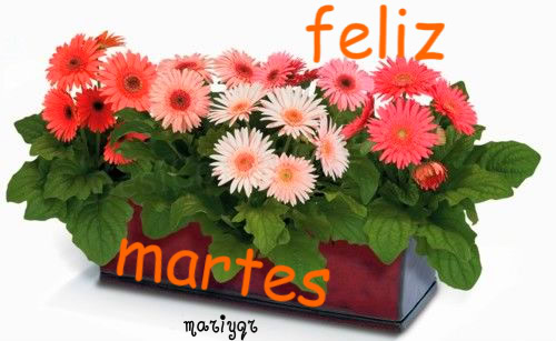 martesflores