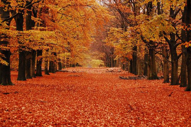 otoñorojizo
