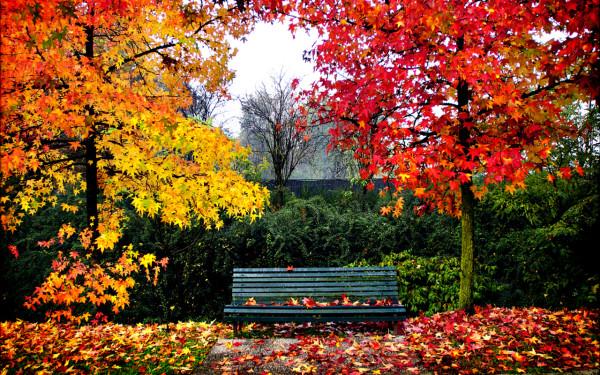 otoñorojizo3