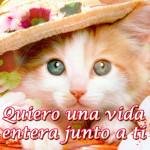 Imágenes con Frases bonitas de gatos para decir te extraño, te amo, te quiero