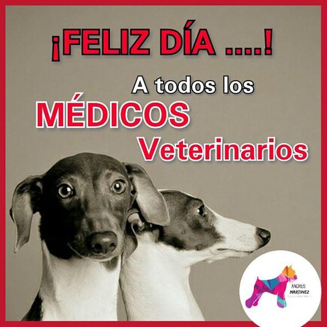 veterinariofeliz11