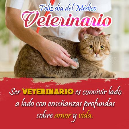 Imagenes Con Frases Bonitas Para Dedicar A Los Veterinarios
