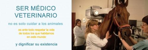 veterinariofrase7