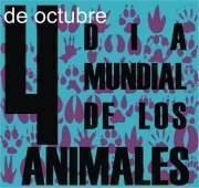 animalesmundial-jpg15