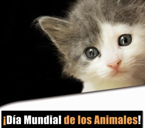 animalesmundial-jpg22