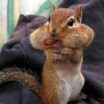Imágenes de animales en situaciones graciosas, chistosas divertidas