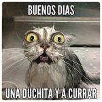 40 Imágenes de Buenos Días chistosas